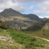 Habitat Restoration & Management